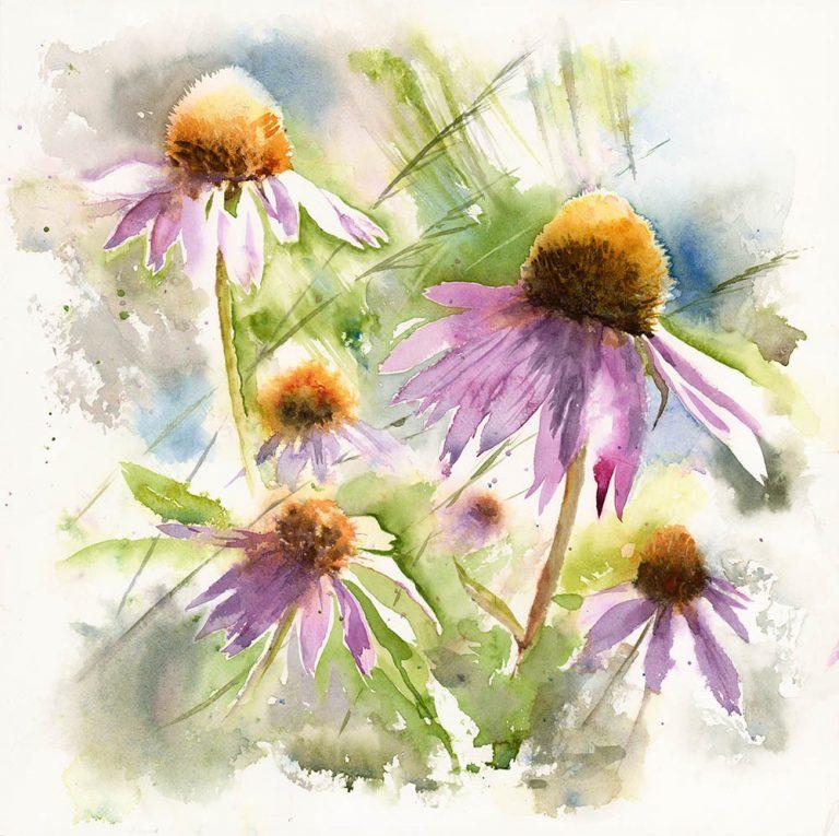 'Late Summer' (Echinacea)  Jane Ferdinando